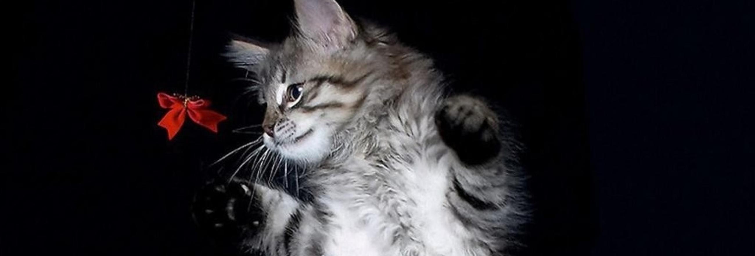 gatto con farfalla slide