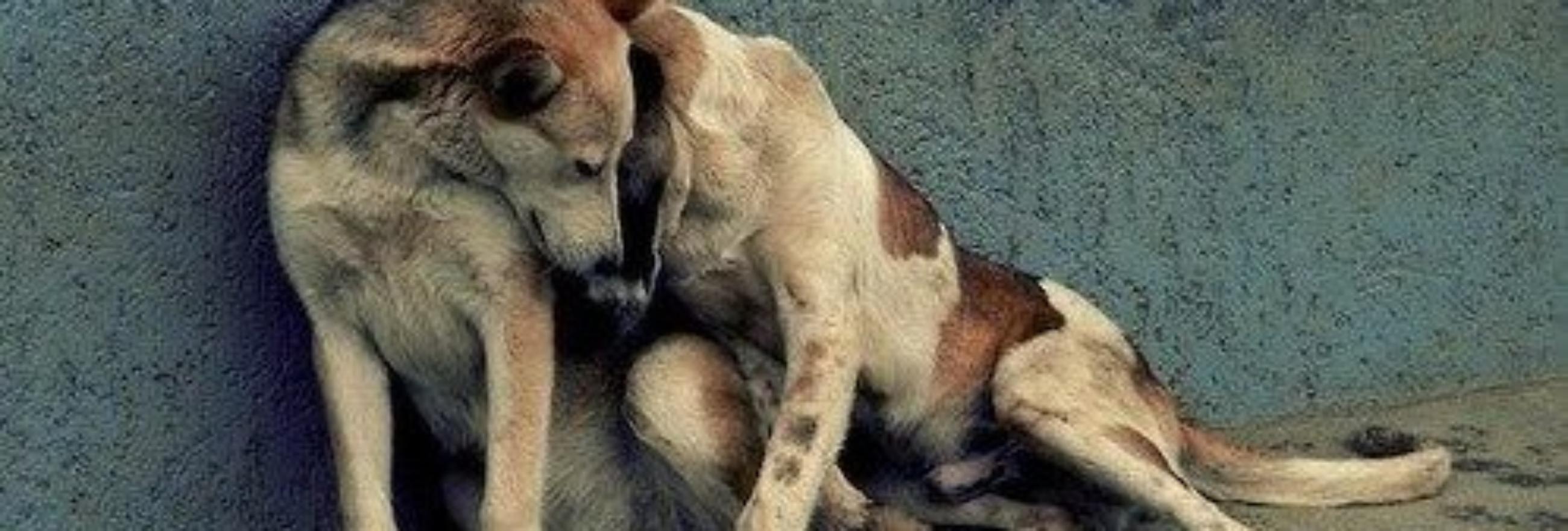 due cani stretti slide