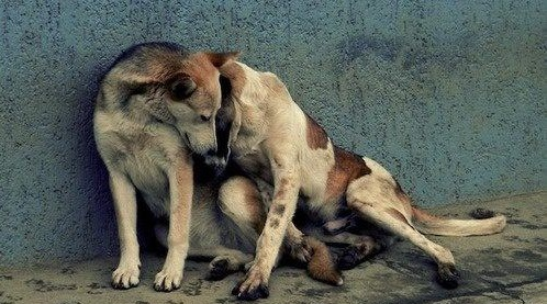 Cuccioli (cani)